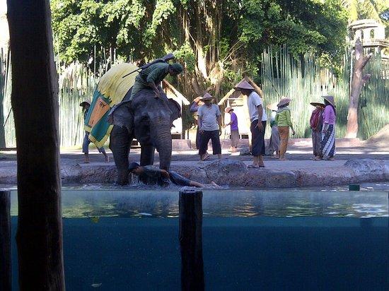 Bali Safari & Marine Park : Elephant show