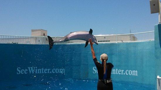 Clearwater Marine Aquarium: dolphin, Nicholas