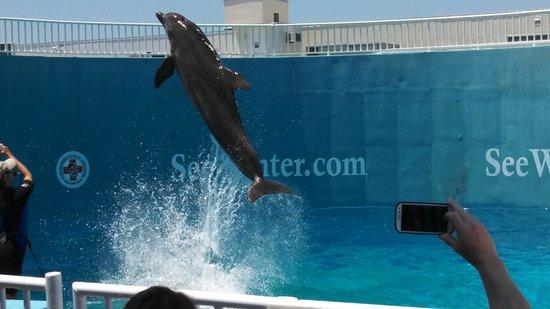 Clearwater Marine Aquarium: dolphin show