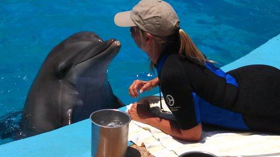 Clearwater Marine Aquarium: nice trainer