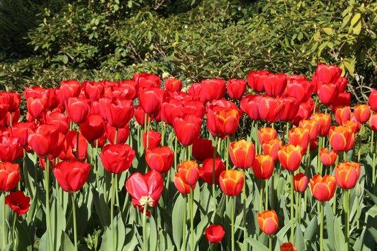 Floralia - Spring Flower Show: 咲き誇るチューリップ
