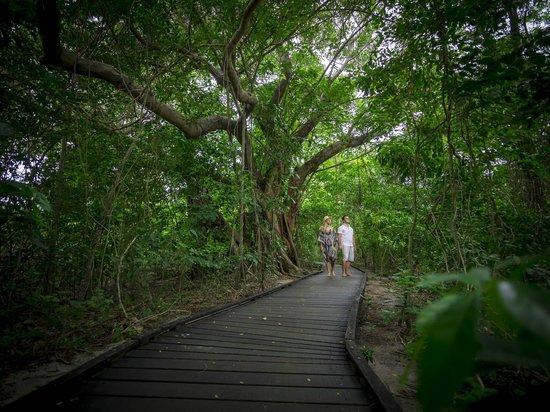 Green Island Resort: Nature Walk