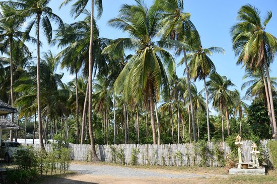 Gulaytu Resort: Вид из номера