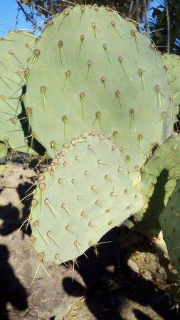 Ethel M Chocolates Factory and Cactus Garden: Ethel M's Cactus Garden Las Vegas