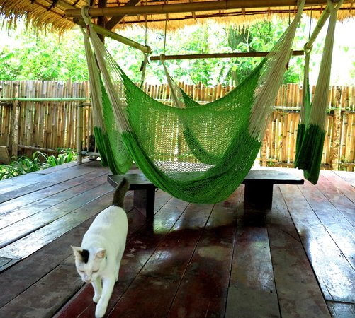 Time For Lime Bungalows: hammocks in the common garden