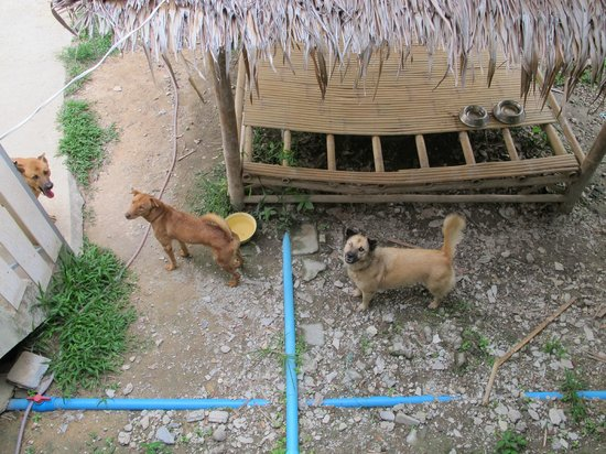 Lanta Animal Welfare : dogs at the shelter waiting for cuddling