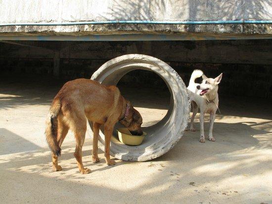 Lanta Animal Welfare : 2 doggies