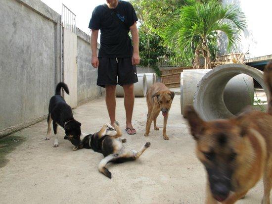 Lanta Animal Welfare : Dogs playing