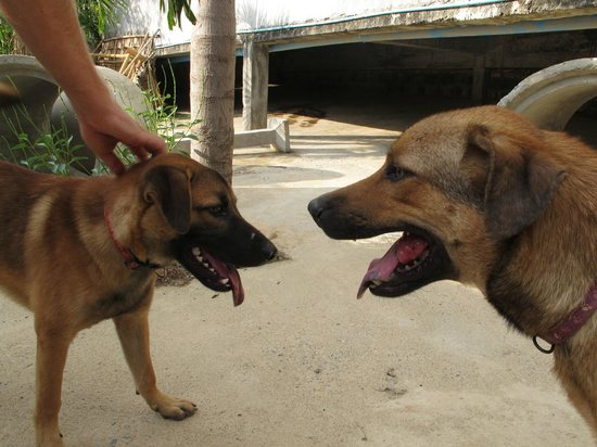 Lanta Animal Welfare : doggies