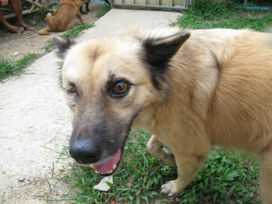 Lanta Animal Welfare : this dog with one eye is going to be adopted :)