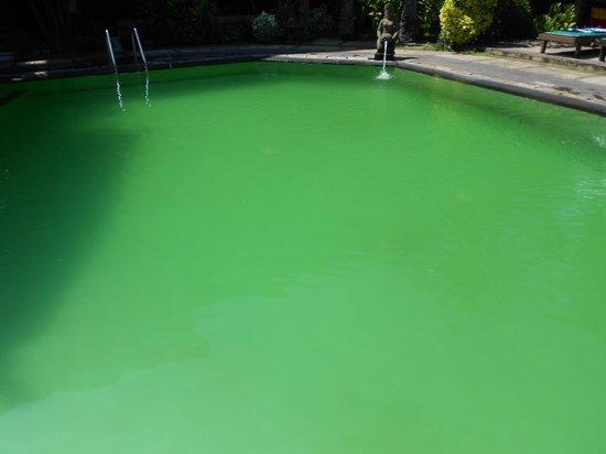 Balisandy Resort : Dirty swimming pool
