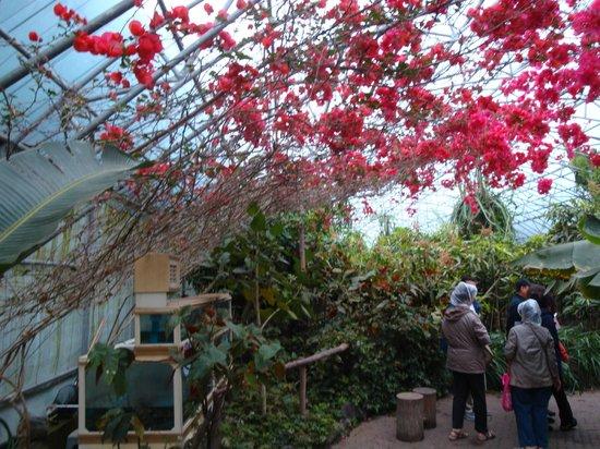 Hallim Park : Tropical Green house