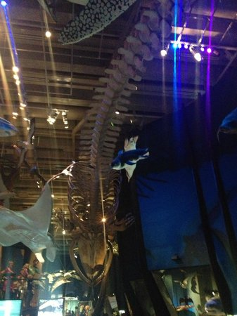 Te Papa Tongarewa : Big Roof Skeleton