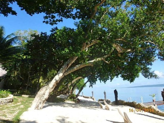 Paradise Cove Resort: Trees by the beach