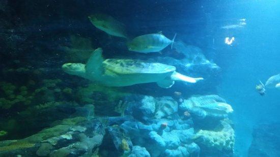 National Sea Life Centre: Huge turtle