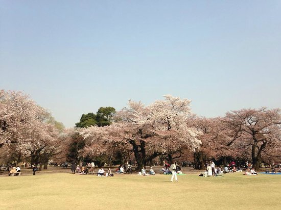 Shinjuku Gyoen National Garden: Spacious park