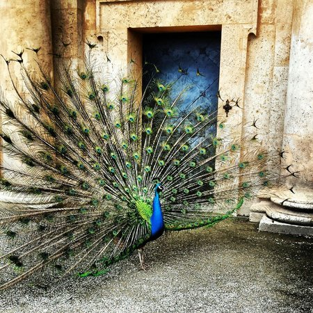 Schloss Eggenberg: Peacock Von Eggenberg