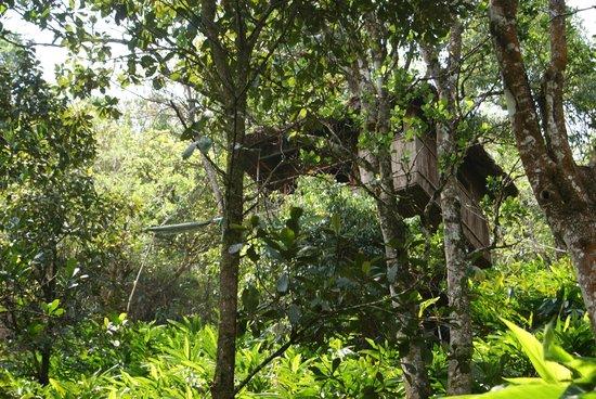 Greenwoods Resort: Vanya treetop accommodation in the jungle
