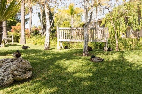 Ramada Santa Barbara: Resting ducks