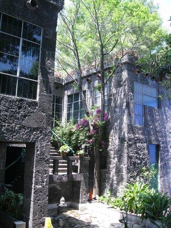 Musée Frida Kahlo : Frida Kahlo