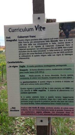 Azienda Agraria Saio: cv d'un autre vignoble