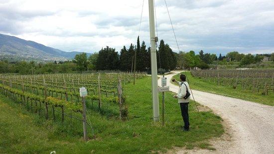 Azienda Agraria Saio: vue sur une partie des vignes