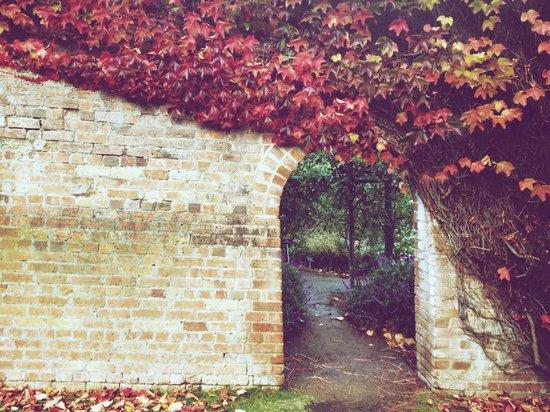 Royal Tasmanian Botanical Gardens: Mixed rose garden