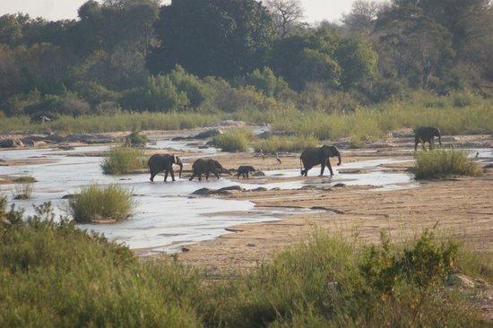 Tydon Safari Camp : Games picture