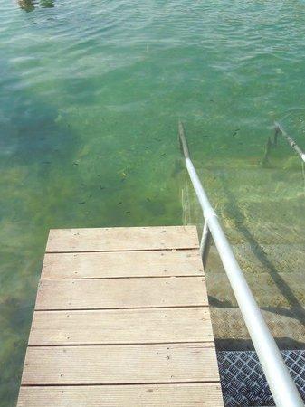 Vouliagmeni Lake : Lake Vouliagmeni