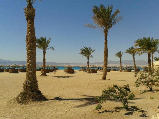 Kempinski Hotel Soma Bay: Soma Bay, Mar Rosso, Egitto, barriera corallina, spiaggia