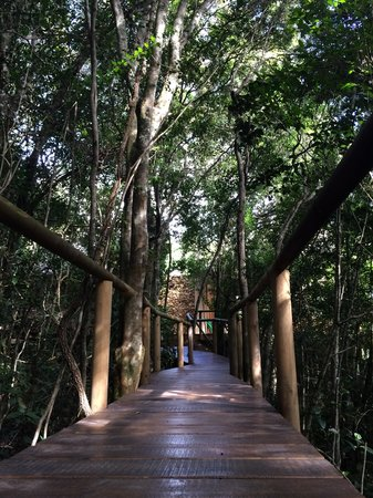 Trogon House and Forest Spa: Wooden Walkways