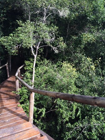 Trogon House and Forest Spa : Entering the forrest walkways