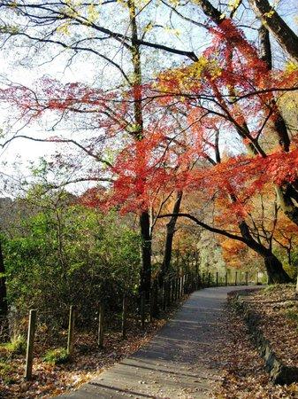Shakujii Park : ...
