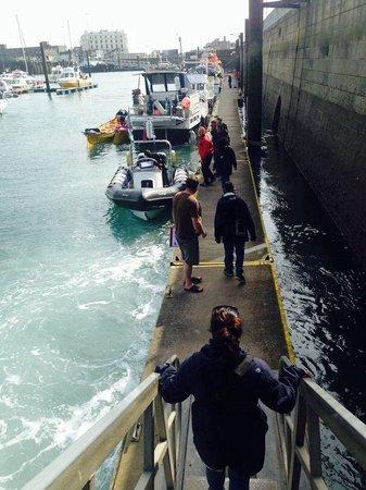 Dover Sea Safari: Best experience