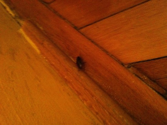 KAROLY Apartment : Ottimi gli scarafaggi!