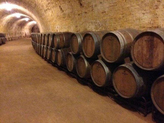 Gourmet Madrid Tours : Winery built by King Carlos III