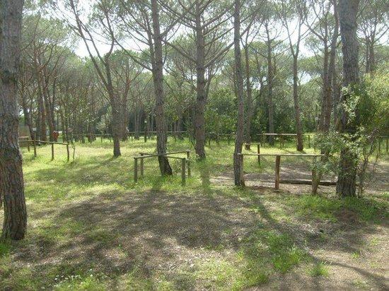 Camping Etruria: pineta campeggio