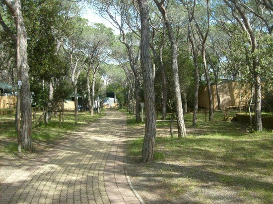Camping Etruria: piazzole campeggio