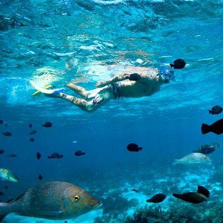 Ningaloo Reef: Ningaloo