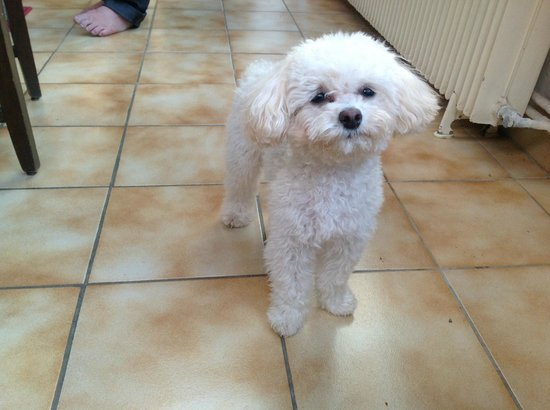 L'Echappee Belle Chambres d'Hotes : Loulou the family dog