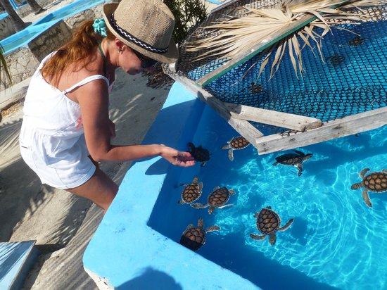 Sea Turtle Hatchery: 4 meses de edad