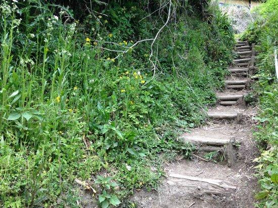 Kamakura Hiking Trails : 山道