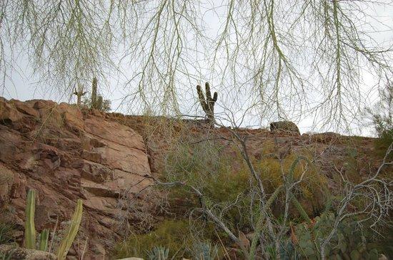 The Phoenician, Scottsdale: cactus garden
