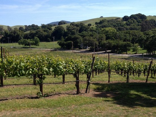Kastania Vineyards: Kastania vineyard