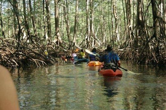 Hotel Laguna Mar: mangrove. la laguna