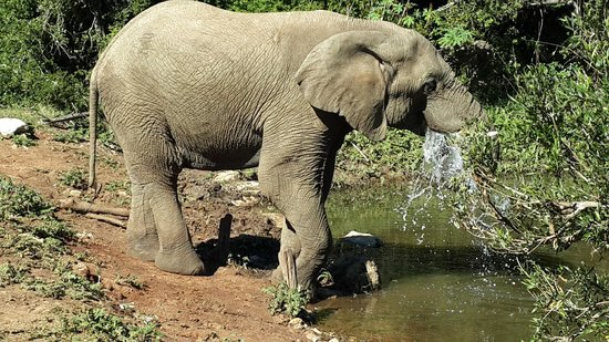 Leeuwenbosch Country House: Elephant