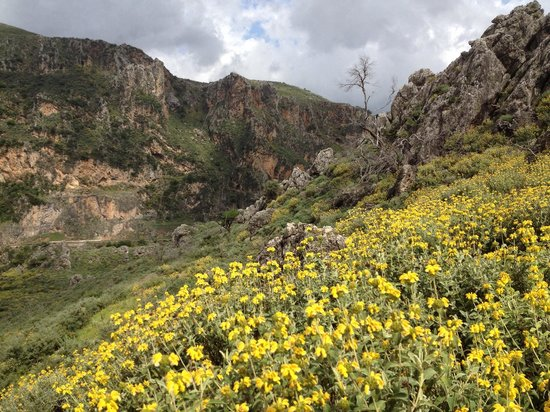 Wild flowers - Foto di Topolia Gorge, Chania - TripAdvisor