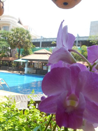 Hotel Somadevi Angkor Resort & Spa: Beautiful garden by the pool