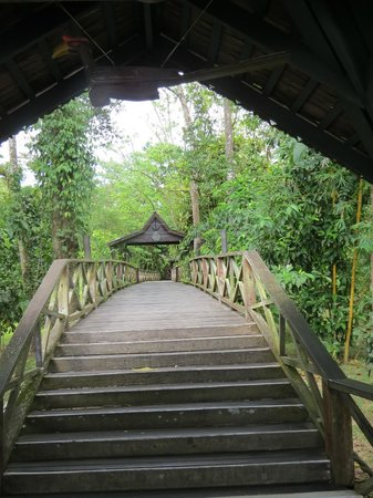 Sukau Rainforest Lodge : The entrance to the lobby. above the rainforest
