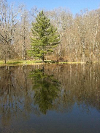 The Mayflower Grace: The beautiful pond behind the spa and our cottage